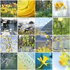 yellowgreenbluespring / žutozelenoplavoproljeće (Gordana AM) Tags: blue canada green yellow collage vancouver port photography photo spring photographer bc mosaic columbia coquitlam british lower mainland gordana mosaicmaker mladenovic bighugelabs lepiafgeo wwwgordanaphotocom yellowgreenbluespring