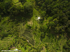 Tegalalang rice terraces - Bali-2016-4 (Christian Loader) Tags: bali field indonesia rice terrace aerial system unesco worldheritagesite agriculture irrigation ubud paddyfield riceterrace drone phantom3 tegalalang aerialimage subak tegallalang scubazoo christianloader tegalalangriceterrace scubazooimages djiphantom3professional
