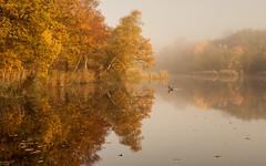 The Pond (hammermad) Tags: autumn trees orange lake water eppingforest duck pond essex essexlandscapes