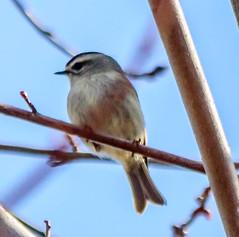 untitled (vernonbone) Tags: birds nikon sigma 500mm eastpoint d3200 april2016