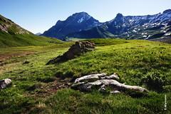 Engstligenalp, Adelboden (welenna) Tags: blue schnee summer sky mountain snow mountains alps landscape switzerland view swiss berge alpen blume berneroberland adelboden engstligenalp schwitzerland