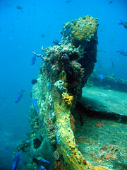 Grenada (17) (stevefenech) Tags: st islands underwater steve scuba diving stephen grenada tropical caribbean lesser georges windward fenech antilles fennock