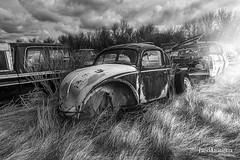 A Bugs Life - BW (Pat Kavanagh) Tags: canada abandoned field car vw volkswagen volvo beetle alberta rusted rusting homestead vwbeetle farmersfield taber