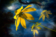 An Ode to Mogly (AjayGoel2011) Tags: abstract flower texture yellow photomanipulation photoart