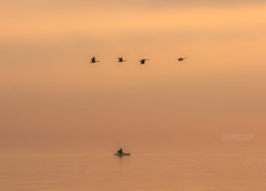 Kayak and Geese (Cale Best Photography) Tags: ca morning mist lake ontario canada bird beach nature water fog sunrise landscape boat flying geese kayak quiet peace outdoor wildlife flight calming lifestyle peaceful calm greatlakes telephoto windsor serene activity idyllic active sandpoint lakestclair