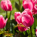 """2016_04_17_Floralia_Bxl-20 • <a style=""""font-size:0.8em;"""" href=""""http://www.flickr.com/photos/100070713@N08/26483522146/"""" target=""""_blank"""">View on Flickr</a>"""