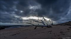 Pose longue sur la plage au lever du jour (Laurent Asselin) Tags: mer sable jour ciel nuages paysage plage tronc kourou aube ocan guyane poselongue
