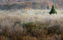 That Guy (rickhanger) Tags: trees nature forest landscape westvirginia canaanvalley outstanding