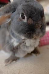 MJ (Ed Swift) Tags: rabbit bunny fauna canon mj sigma lagomorph 7d2 1835mmf18 sigma1835mmf18art 1835mmf18art