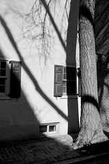 Shadowplay. (henry_beckmeyer) Tags: diafine doublex leicam5 canon352ltm