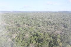 Cerrado (alrcardoso) Tags: amazon santarm cerrado savanah amazonia amazonie savana