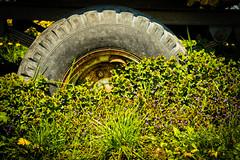 IMG_8687.jpg (vossemer) Tags: de deutschland jahreszeiten natur pflanzen blumen frhling blten niedersachsen lwenzahn jork frhjahr
