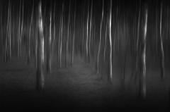 Getaway (Magnus Nicander) Tags: trees blur dark woods nikon key forrest sweden low surreal mystical birch magnus f4 70210 nicander d7000