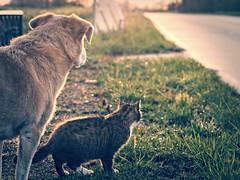 2016-04-30_20-06-34 (torstenbehrens) Tags: cat dog hund katze kater strasenseite olympus ep5 sigma 60mm f28 dn digital camera on1 on1pic tier wauwau