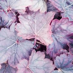 Looking Down (Elizabeth_211) Tags: plant nature leaves garden tennessee 100400mm jacksontn westtn utgardensjackson sherielizabeth