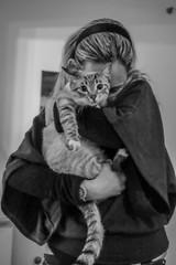 (Rodolfo_Felici) Tags: portrait blackandwhite cats animals cat gatti animali biancoenero mariateresa tontolina gattine