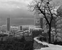 Dondaemun Wall Winter Tree (Lig Ynnek) Tags: blackandwhite tree film wall seoul southkorea dongdaemun ddp tmy400
