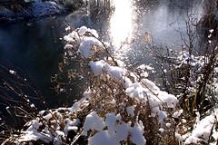 Wasserpark Whrentrup (08) (Stefan_68) Tags: park schnee winter snow reflection nature germany deutschland natur nrw nordrheinwestfalen reflektion lippe oerlinghausen northrhinewestphalia parkanlage kreislippe lipperland wasserparkwhrentrup