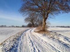 Sunny Winterday (elecreal) Tags: winter white nature field way landscape natur feld sunny sonnig landschaft 4s weg plau iphone weis abigfave
