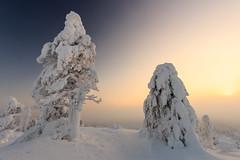 Iso-Syte 5.2. (SamppaV) Tags: snow suomi finland snowy freezing tranquility talvi cpl 2016 isosyte tykkylumi canon6d bwcpl tykkypuut wwwvalonkuvaajatfi