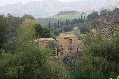 IMG_2637 (@XIII) Tags: panorama tree alberi canon ag sicily sicilia agrigento akragas girgenti frommypointofview