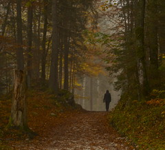 Autumn Woods - Garmisch-Partenkirchen (nebulous 1) Tags: trees fall nature colors germany deutschland bavaria nikon path garmischpartenkirchen eibsee autumnwoods nebuous1
