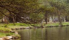In the garden (Nop Piriya) Tags: bird water reflaction