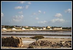 IMG_1772 (rinosaltini1) Tags: saline sicilia trapani marsala dello mozia riserva stagnone