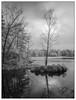 Baneheia, 3. stampe (Georg Engh) Tags: infrared infrarød baneheia landscapesshotinportraitformat