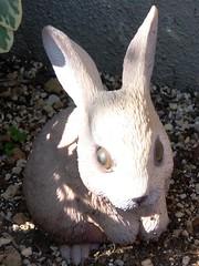 #6934 rabbit () (Nemo's great uncle) Tags: rabbit hare  funabashi    setagayaku tky