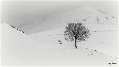 white landscape (Luigi Alesi) Tags: park winter bw italy parco white snow black nature landscape nikon scenery italia raw natura bn national neve monte inverno bianco nero marche sul paesaggio nera castelsantangelo monti prata macerata nazionale sibillini d7100