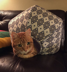 In the Cat Cave (A.Davey) Tags: cat orangecat elsie rescuecat