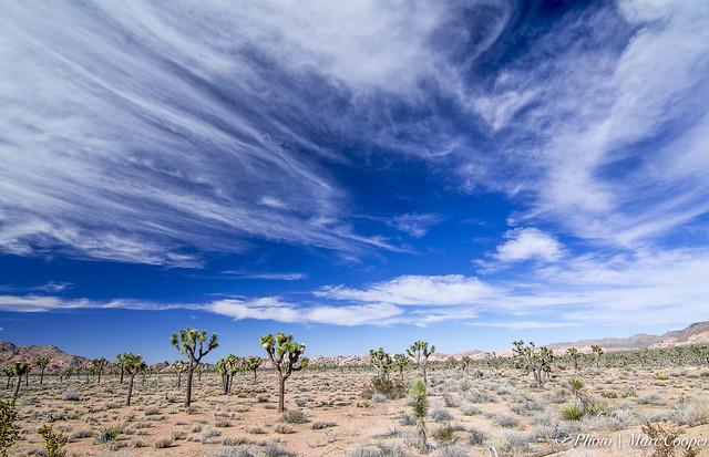 【国別】砂漠緑化事業の方法・成功例と技術・研究|植物