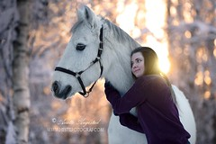 Prince & Elise (Hestefotograf.com) Tags: winter horses horse snow love oslo norway caballo bokeh pony camouflage cavalos ponies forever pferde dappled cavalo pferd whitehorse equine equus paard horseandgirl equinephotography equinephotographer hestefotograf