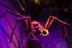 Aragog (Cathy G) Tags: uk canon giant spider harrypotter hertfordshire watford lseries giantspider canon24105mm aragog canon7d harrypotterstudiotour