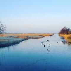 Winters (nheij) Tags: winter ice landscape frozen scenery frost bevroren meadow polder landschap kou ijs uithoorn meerwijk