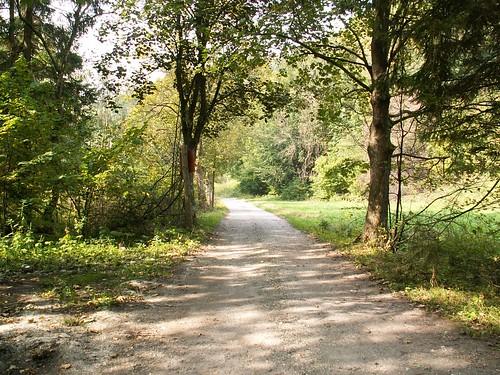 Droga przez Polanę nad Skrzynką