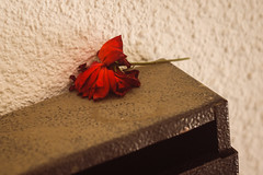 (Brînzei) Tags: flowers red roses blurry bokeh decay rusty m42 junkyard murky manualfocus valdai bucurești drumultaberei helios44m658mmf2 sonynex7