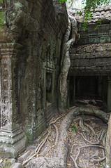Ta Prohm 1 (sabine268) Tags: tree nature kambodscha natur angelinajolie angkor taprohm tombraider