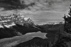 Spring in the Canadian Rockies (Black & White) (thor_mark ) Tags: trees lake canada mountains nature blackwhite snowcapped evergreen alberta portfolio day4 frozenover banffnationalpark peytolake icefieldsparkway canadianrockies evergreentrees mountwilson glaciallake glacialvalley highway93 mountmurchison project365 icecovered caldronpeak lookingnw mountpatterson waputikmountains mountainsindistance blueskieswithclouds silverefexpro2 nikond800e mountainsoffindistance lookingtomountainsofthecontinentaldivide hillsideoftrees lookingtocontinentaldivide murchisongroup walktopeytolakeoverlook clinerange centralfrontranges partialmeltingoficeonlake centralmainranges northsaskatchewanriverranges northwaputikmountains
