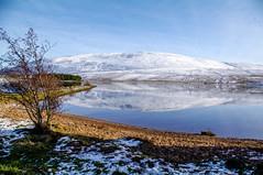 Pentland Hills Walk (ddh Photos) Tags: geese edinburgh pentlandhills