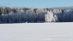 Vnern lake at snow (Random Forum) Tags: lake snow ice woods vnern mellerud