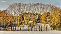 Leaning trees (GerWi) Tags: schnee sky snow nature landscape outdoor natur pflanze pflanzen felder himmel haus landschaft bäume baum acker waldhaus schief schneedecke