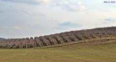 DSC_0158 jav httrf wb (bwagnerfoto) Tags: landscape spring hill landschaft tjkp dombok