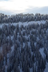 encrusted (shoots canons) Tags: blue trees winter mountain snow mountains cold tree rockies botanical woods frost pointy snowy frosty aerial nationalforest rockymountains wyoming icy northface botany slope steep coniferous conifer wooded wintry publicland shoshonenationalforest forested confers