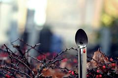 """""""Der Lffel"""" oder """"Morgentliche Entdeckungen zwischen  grozgigen Brgerhusern der Jahrhundertwende irgendwo in N."""" (Petra U.) Tags: dof bokeh spoon thorns lffel dornen unschrfe wohnviertel nikond5100"""