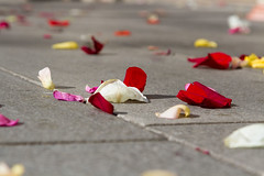 In Roses (El Mariachi Minsk) Tags: flowers red roses white flower rose canon petals pavement petal sunlit canoneos canonlens canonef24105mmf4l canonllens naturalillumination
