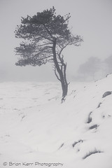 All Alone (.Brian Kerr Photography.) Tags: winter snow cold tree sony cumbria alston sonyeurope briankerrphotography sonypro sonyuk a7rii