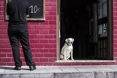 Men, 10  (fertraban) Tags: dog bar espaldas back gijn restaurante perro cimadevilla xixn men camarero cimavilla cuestadelcholo lasballenas