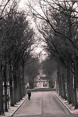 Cimitero di Montmartre (frillicca) Tags: 2015 bn bw cemetery cimitero cimiterodimontmartre march marzo montmartre montmartrecemetery parigi paris îledefrance francia